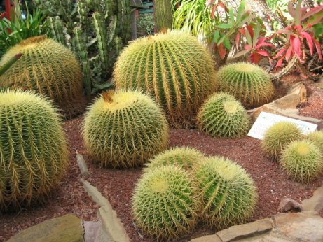 Name:  kaktusler 011.jpg Views: 1255 Size:  60.9 KB