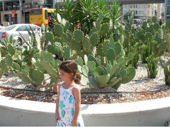 Name:  kaktus1.jpg Views: 1707 Size:  28.4 KB
