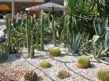 Name:  kaktus3.jpg Views: 4413 Size:  34.6 KB