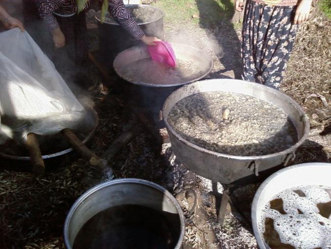 Name:  Kaynayan su salan pancarlar cuvallara süzülmesi için dolduruluyor.jpg Views: 14503 Size:  60.1 KB