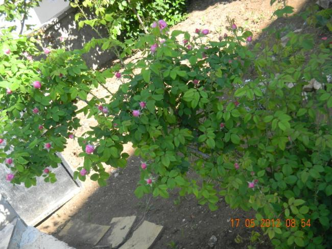 Name:  DSCN1140.jpg Views: 2866 Size:  69.0 KB