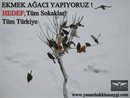 Name:  ekmek ağacı.jpg Views: 1693 Size:  6.7 KB