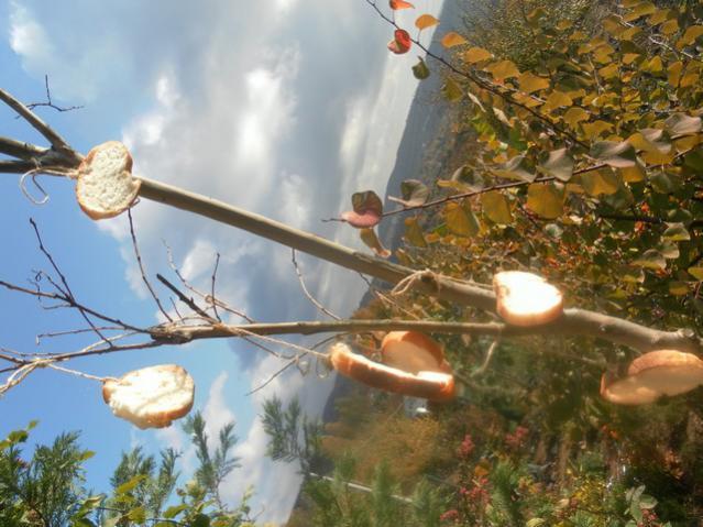 Name:  ekmek ağacı 002.jpg Views: 2371 Size:  52.8 KB