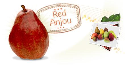 Name:  red_anjou.jpg Views: 9888 Size:  31.4 KB
