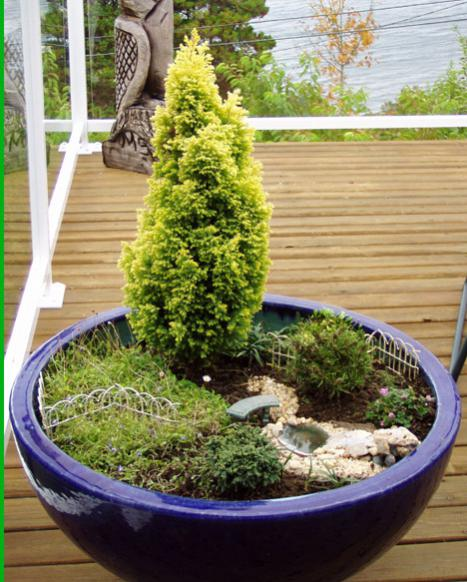 Name:  Char's Miniature Garden in Summer.jpg Views: 12739 Size:  59.5 KB