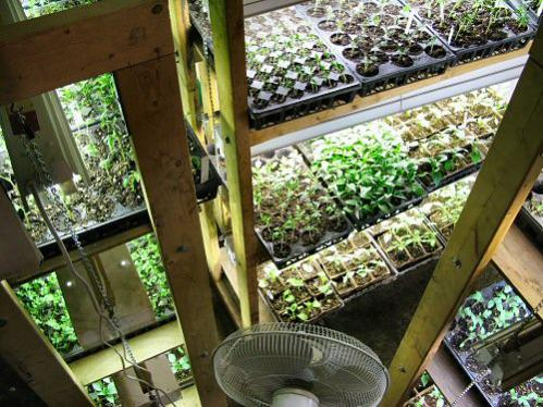Name:  vanda seedlings.jpg Views: 1236 Size:  53.1 KB