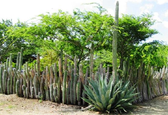 Name:  cactus-fence.jpg