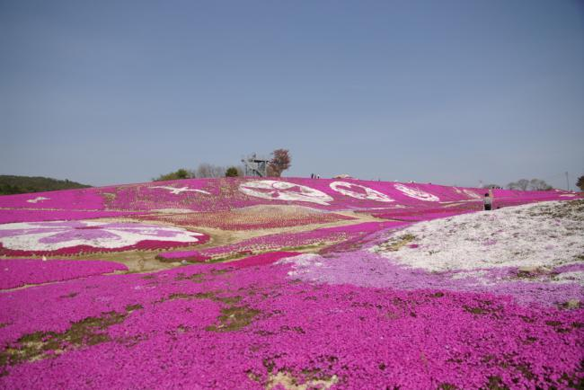 Name:  Phlox subulata2.jpg