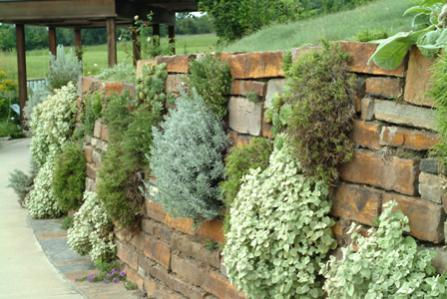 Name:  main herb rock wall.jpg