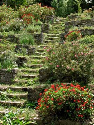 Name:  Gen Barrios stepped garden stairs.jpg Views: 6828 Size:  37.2 KB