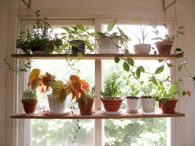 Name:  15_idea-of-a-garden-01.jpg Views: 39693 Size:  54.2 KB