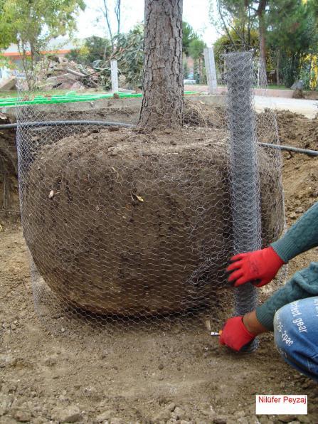 Name:  Çam Ağacı Sökümü 11.jpg Views: 22229 Size:  72.0 KB