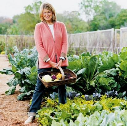 Name:  Martha Stewart.jpg