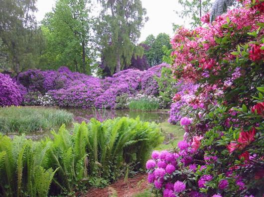 Name:  rhododendron1.jpg