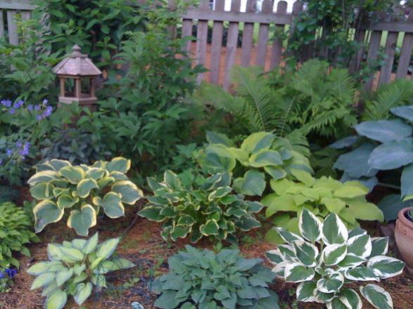 Name:  hosta-garden-edging-ideas.jpg Views: 6670 Size:  52.2 KB