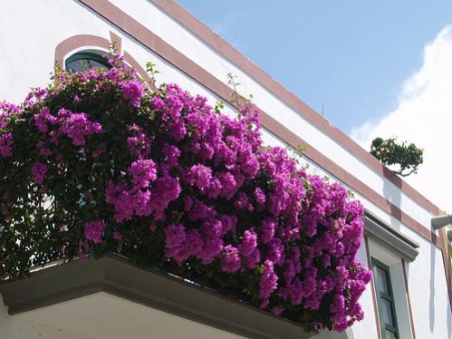 Rnek balkonlar page 4 - Fiori da vaso perenni ...