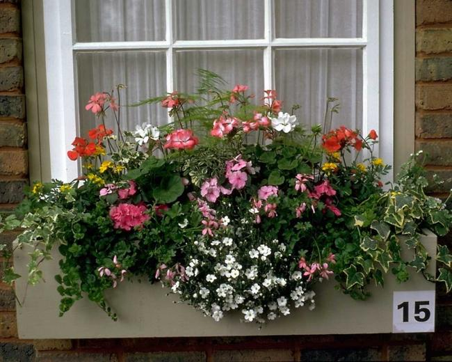 Name:  house_window_flowers.jpg