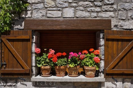 Name:  ceramic-flower-pots_13722.jpg