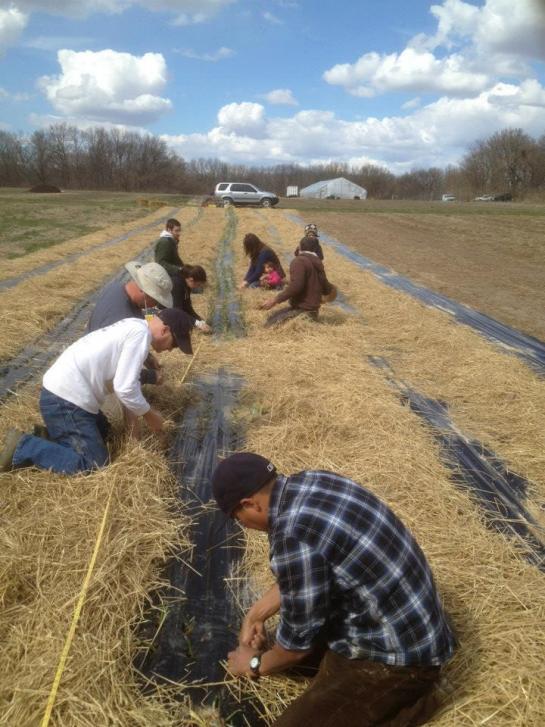 Name:  Onions 4 Planting 15.04.2014.jpg Views: 16767 Size:  72.8 KB
