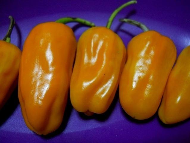 Name:  turuncu jalapeno.jpg Views: 1676 Size:  50.3 KB