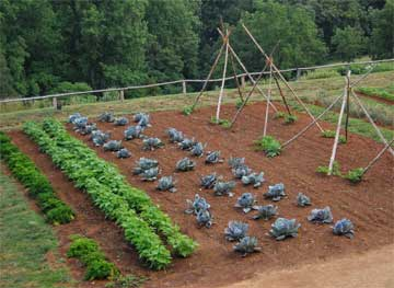 Name:  vegetable-garden-start.jpg