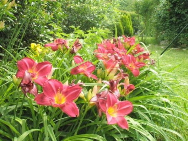 Name:  bahçe res.M261 (600 x 450).jpg Views: 1814 Size:  62.2 KB