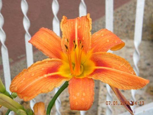 Name:  DSCN2779.jpg Views: 1373 Size:  28.8 KB