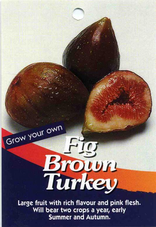 Name:  Fig-Brown-Turkey.jpg