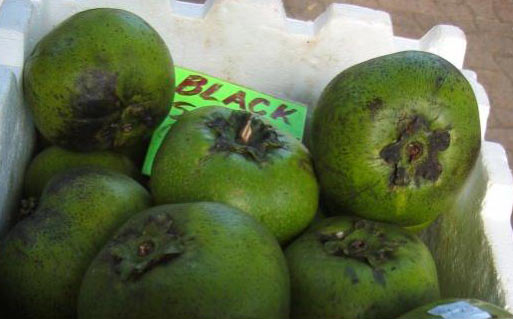 Name:  black-sapote.jpg