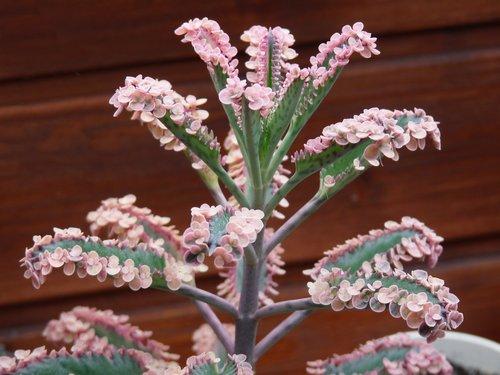 Name:  x_pinkbutterflies5_k.jpg Views: 2743 Size:  40.3 KB