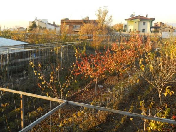 Name:  bahçe foto 2.jpg Views: 7209 Size:  59.0 KB