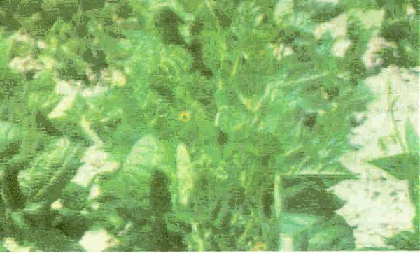Name:  resim3.jpg Views: 19314 Size:  41.3 KB