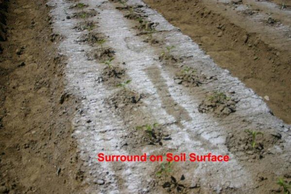 Name:  surround_on_soil.jpg