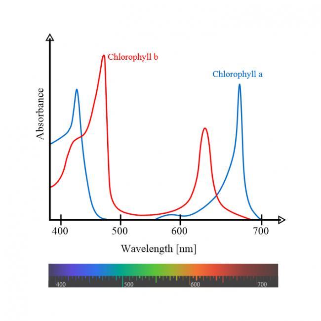 Name:  Chlorophyll_ab_spectra-en.jpg Views: 996 Size:  27.3 KB