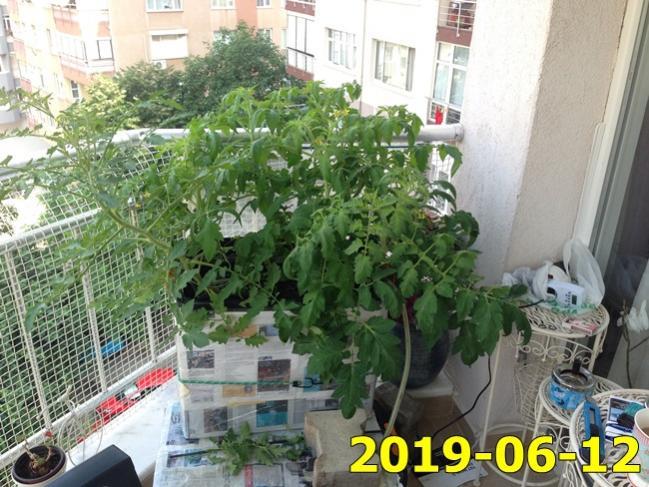 Name:  IMG_1371.jpg Views: 446 Size:  69.1 KB