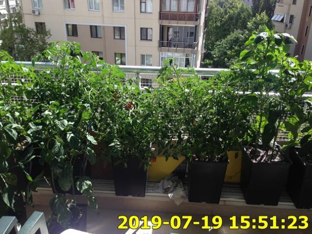 Name:  IMG_1736.jpg Views: 326 Size:  71.5 KB