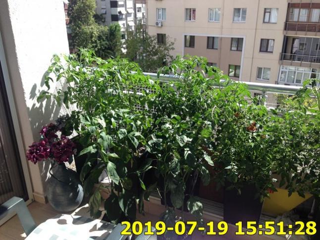 Name:  IMG_1737.jpg Views: 339 Size:  71.7 KB