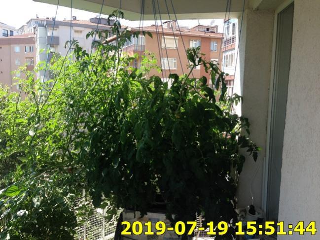 Name:  IMG_1739.jpg Views: 317 Size:  67.4 KB