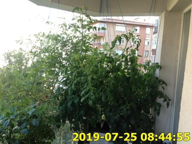 Name:  IMG_1761.jpg Views: 330 Size:  60.9 KB