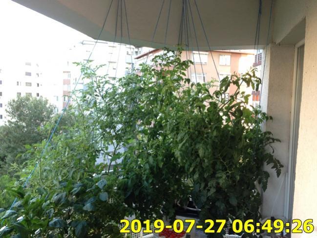 Name:  IMG_1790.jpg Views: 324 Size:  59.3 KB