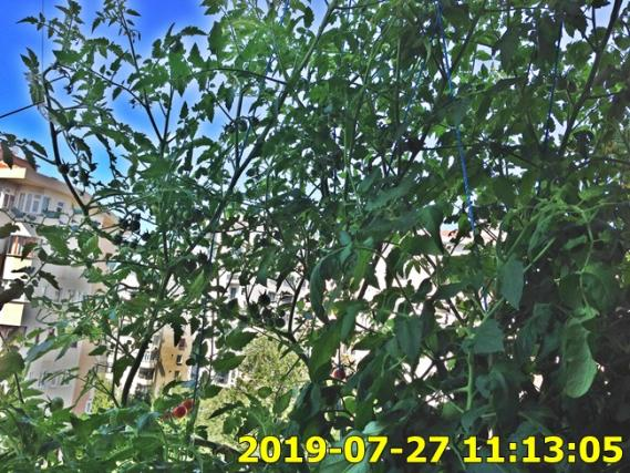Name:  IMG_1797.jpg Views: 316 Size:  75.2 KB