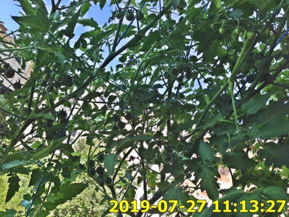 Name:  IMG_1799.jpg Views: 316 Size:  74.7 KB