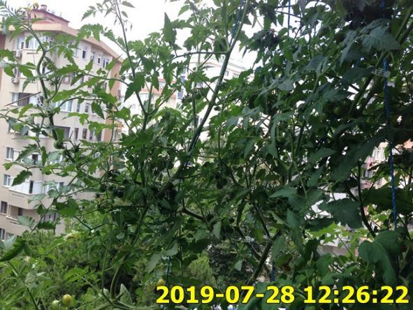 Name:  IMG_1823.jpg Views: 304 Size:  73.8 KB