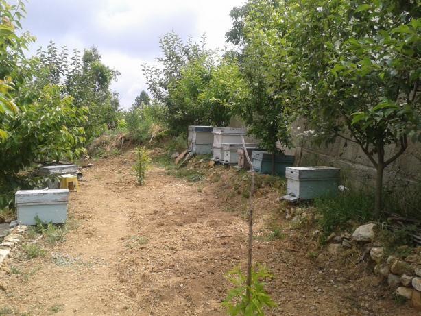 Name:  arılarımız 2 (Kopyala).jpg Views: 1930 Size:  70.5 KB