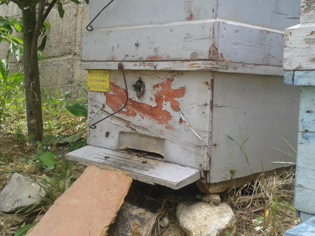 Name:  arılarımız 3 (Kopyala).jpg Views: 1916 Size:  60.0 KB