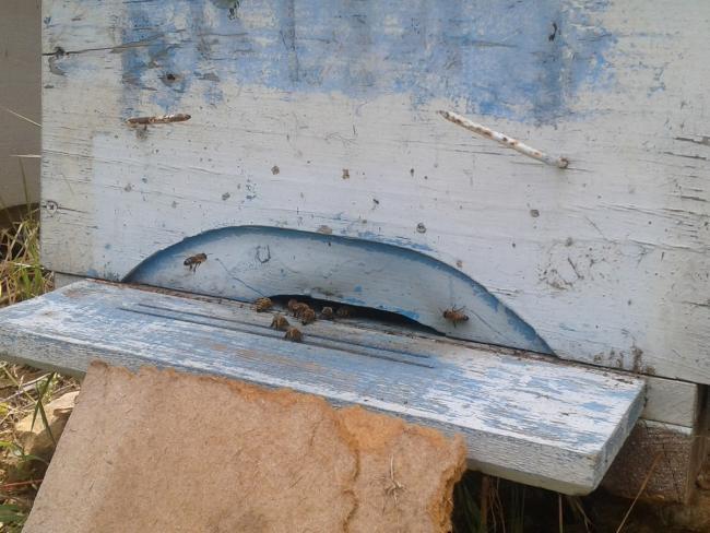 Name:  arlarımız (Kopyala).jpg Views: 1888 Size:  52.1 KB