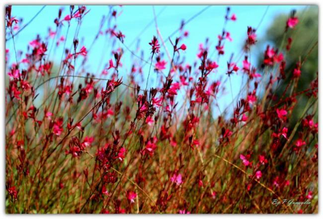 Name:  sonbahar cicekleri.jpg Views: 2857 Size:  59.6 KB