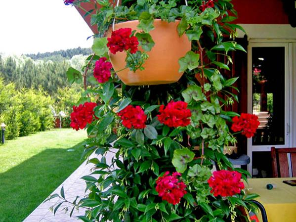 Name:  bahçem01.jpg Views: 12041 Size:  60.9 KB