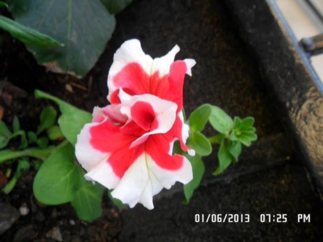 Name:  01.06.2013-05.jpg Views: 5531 Size:  34.1 KB
