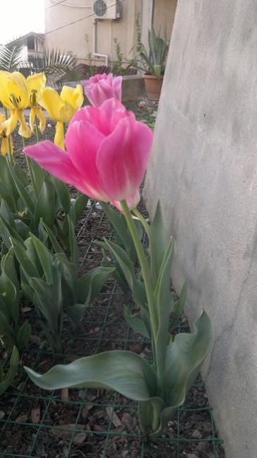 Name:  2014-04-20-502.jpg Views: 4794 Size:  36.3 KB